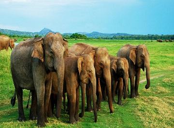 9 مورد از بهترین پارک های ملی جزیره سریلانکا