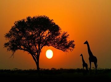 معرفی کشورهای آفریقایی