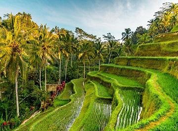 ویزا اندونزی