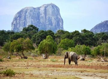 تماشای حیات وحش در پارک ملی یالا در سریلانکا